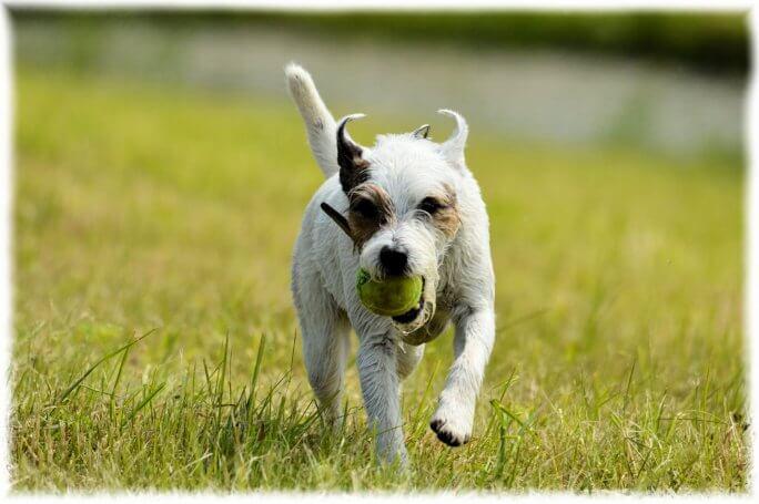 chien doit jouer et faire du sport