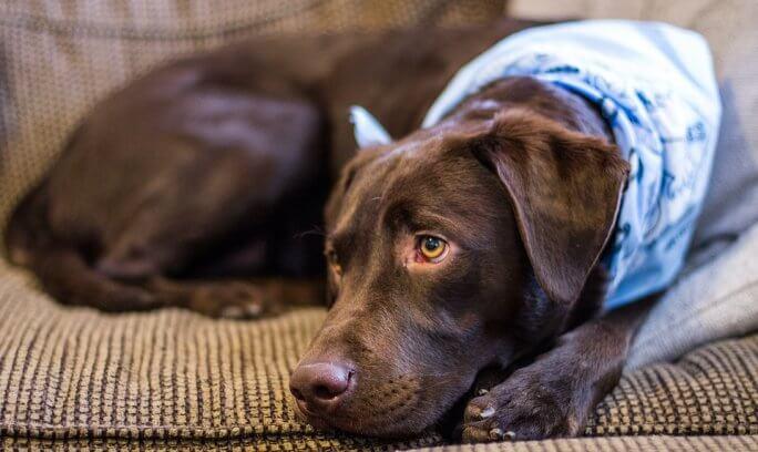 couchette chien espace personnel confort