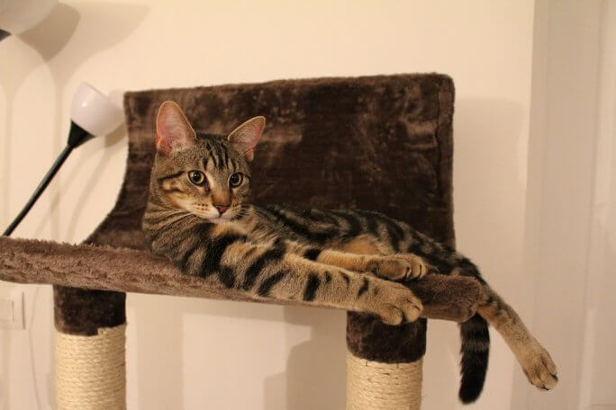 chat confortablement installé sur son arbre à chat