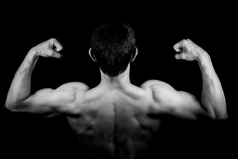 masse musculaire sèche